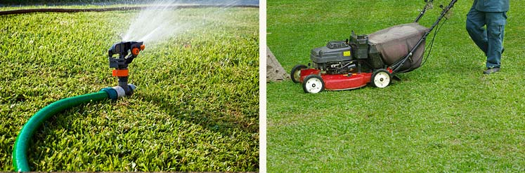 Commercial Landscaping & Gardening Services